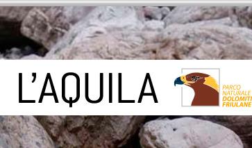 aquila6