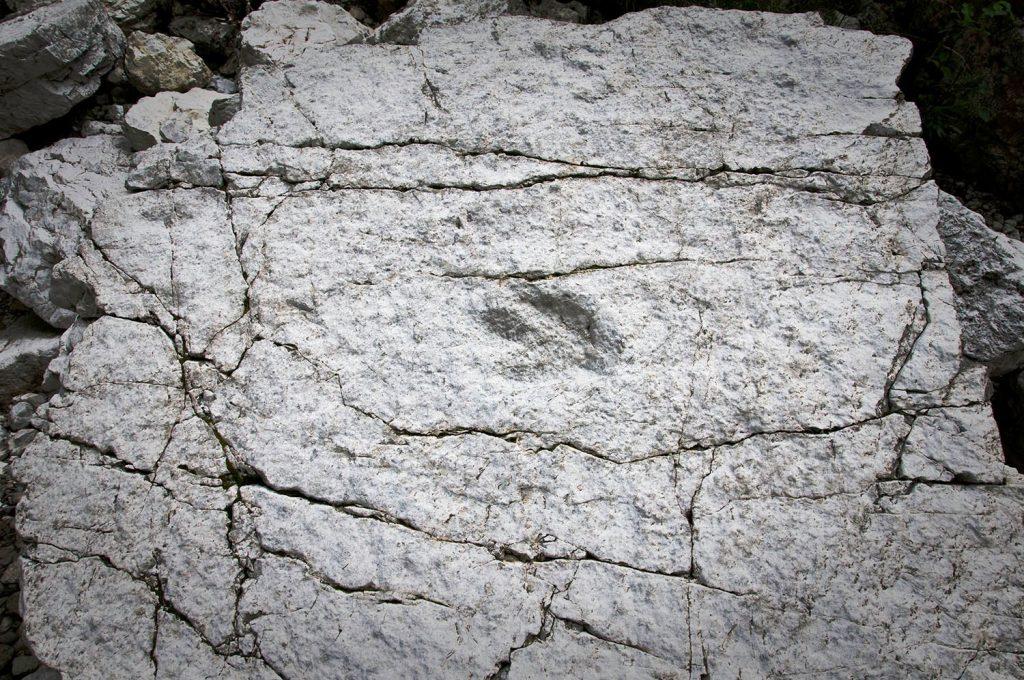 Impronte di dinosauro